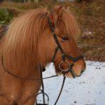 Hrönn  från Skaneyland -såld-